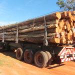 Holztransport der Miller Forest Investment AG