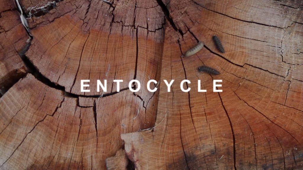entocycle