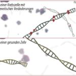 Übersicht zu DNA-Markern
