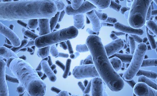 Bakterien unter einem Mikroskop