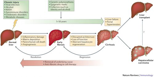 nature-liver_diseases